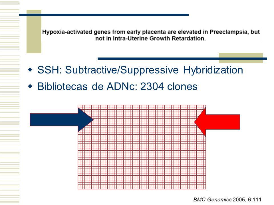 SSH: Subtractive/Suppressive Hybridization Bibliotecas de ADNc: 2304 clones