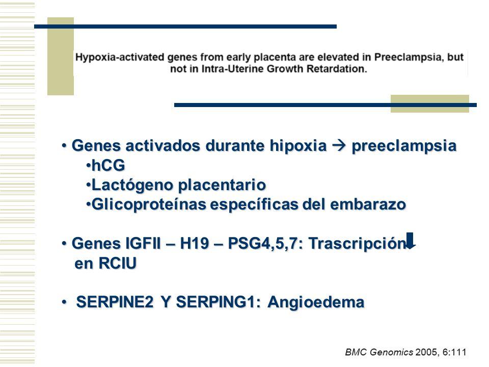 Genes activados durante hipoxia preeclampsia Genes activados durante hipoxia preeclampsia hCGhCG Lactógeno placentarioLactógeno placentario Glicoprote