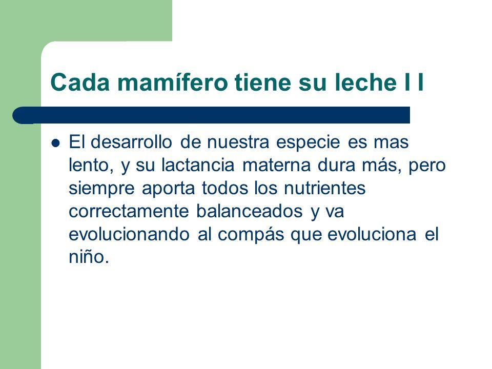 Cada mamífero tiene su leche I I El desarrollo de nuestra especie es mas lento, y su lactancia materna dura más, pero siempre aporta todos los nutrien