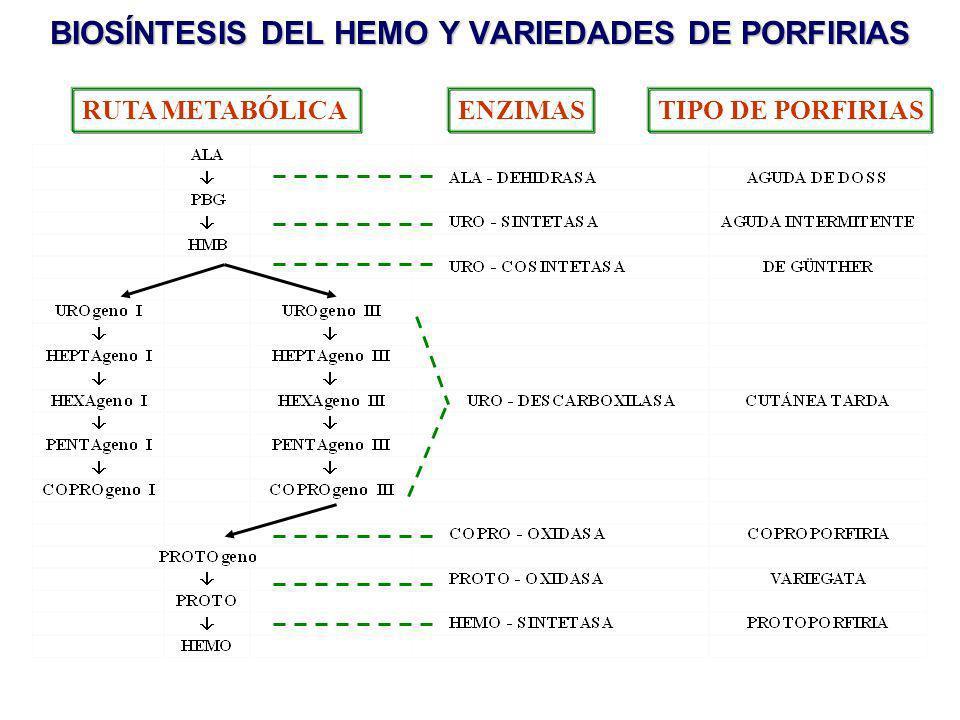 BIOSÍNTESIS DEL HEMO Y VARIEDADES DE PORFIRIAS RUTA METABÓLICAENZIMASTIPO DE PORFIRIAS