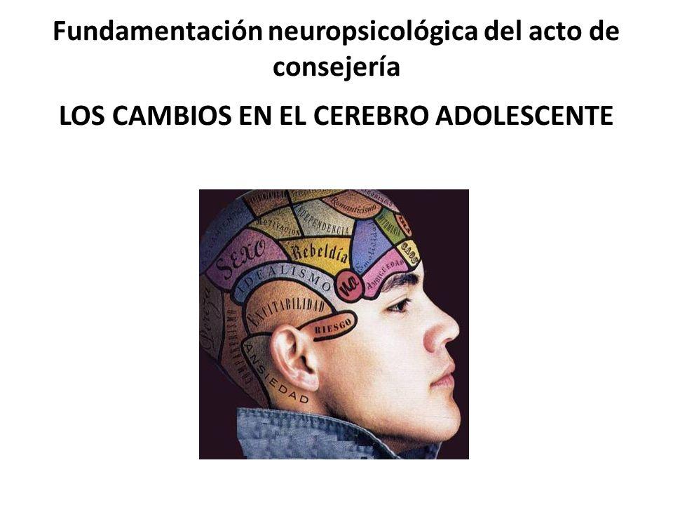 Fundamentación neuropsicológica del acto de consejería LOS CAMBIOS EN EL CEREBRO ADOLESCENTE