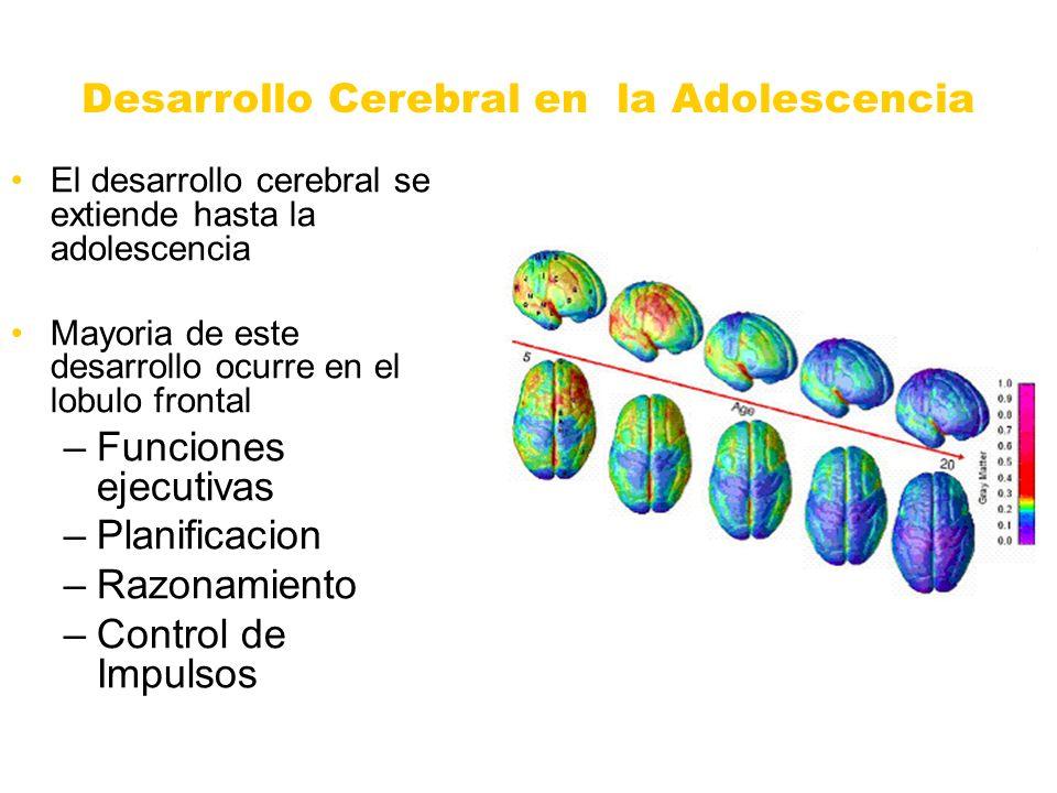 Desarrollo Cerebral en la Adolescencia El desarrollo cerebral se extiende hasta la adolescencia Mayoria de este desarrollo ocurre en el lobulo frontal