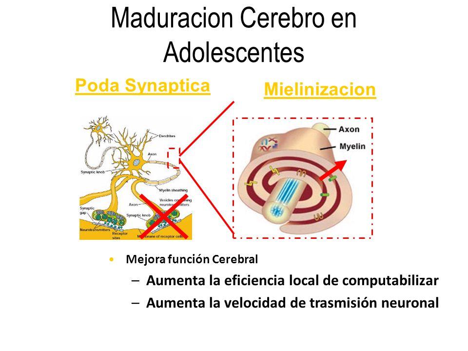 Maduracion Cerebro en Adolescentes Poda Synaptica Mielinizacion Mejora función Cerebral –Aumenta la eficiencia local de computabilizar –Aumenta la vel