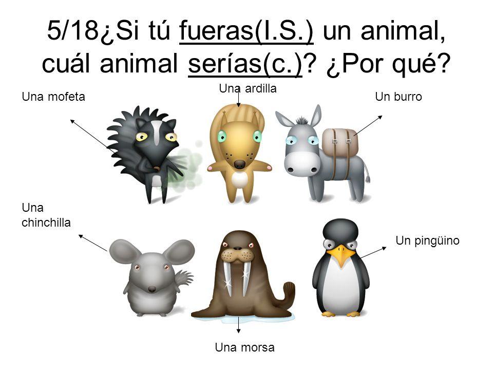5/18¿Si tú fueras(I.S.) un animal, cuál animal serías(c.)? ¿Por qué? Una mofeta Una ardilla Un burro Una chinchilla Una morsa Un pingüino