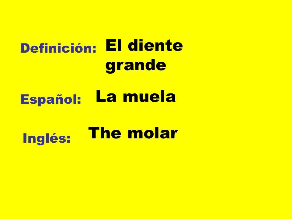 Definición: Español: Inglés: El diente grande La muela The molar