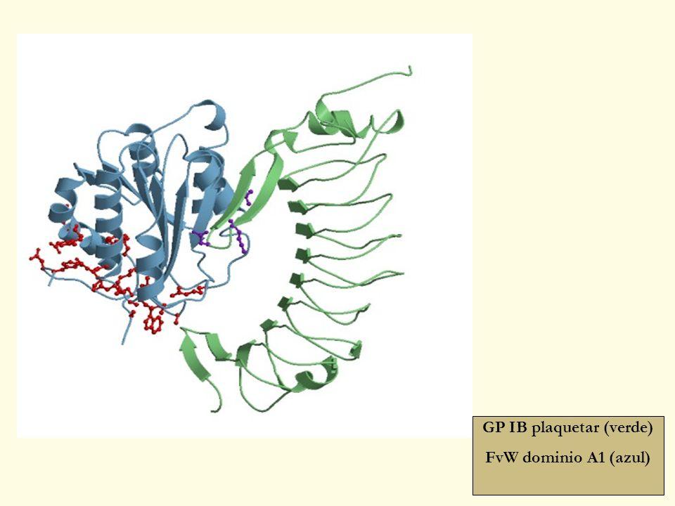 GP IB plaquetar (verde) FvW dominio A1 (azul)