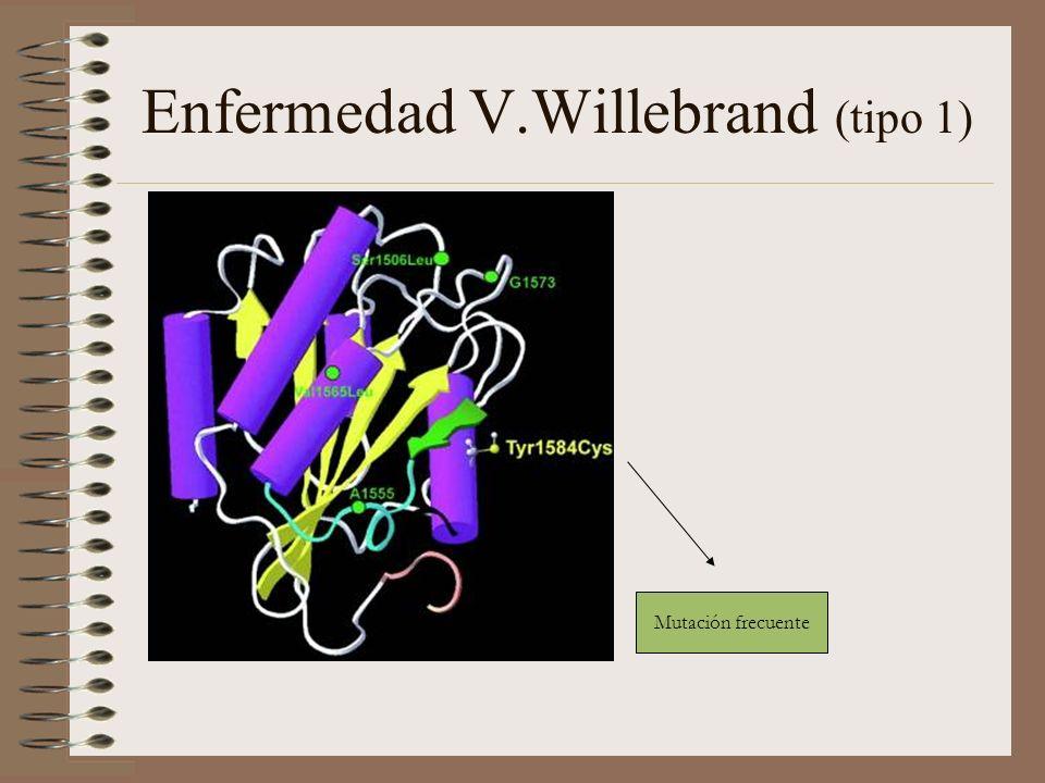 Enfermedad V.Willebrand (tipo 1) Mutación frecuente