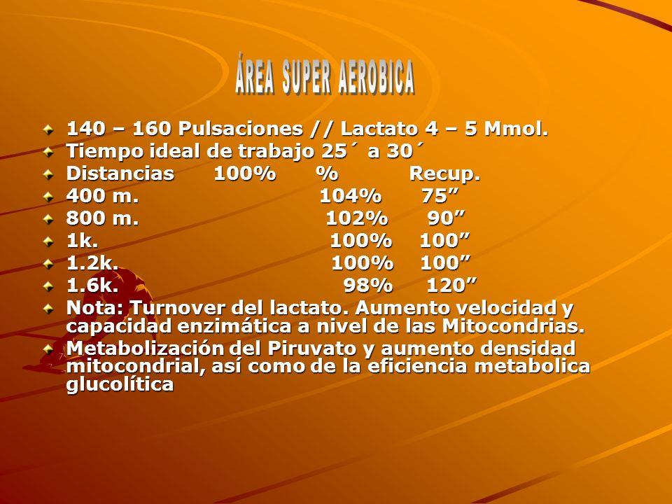 140 – 160 Pulsaciones // Lactato 4 – 5 Mmol. Tiempo ideal de trabajo 25´ a 30´ Distancias 100% % Recup. 400 m. 104% 75 800 m. 102% 90 1k. 100% 100 1.2