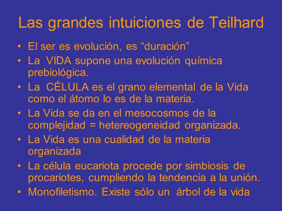 Las grandes intuiciones de Teilhard El ser es evolución, es duración La VIDA supone una evolución química prebiológica. La CÉLULA es el grano elementa