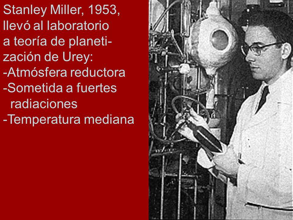 Stanley Miller, 1953, llevó al laboratorio a teoría de planeti- zación de Urey: -Atmósfera reductora -Sometida a fuertes radiaciones -Temperatura medi