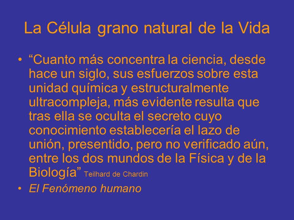 La Célula grano natural de la Vida Cuanto más concentra la ciencia, desde hace un siglo, sus esfuerzos sobre esta unidad química y estructuralmente ul