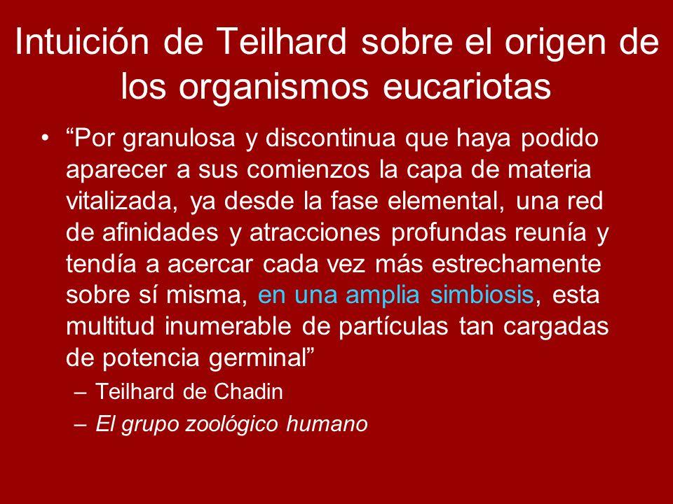 Intuición de Teilhard sobre el origen de los organismos eucariotas Por granulosa y discontinua que haya podido aparecer a sus comienzos la capa de mat