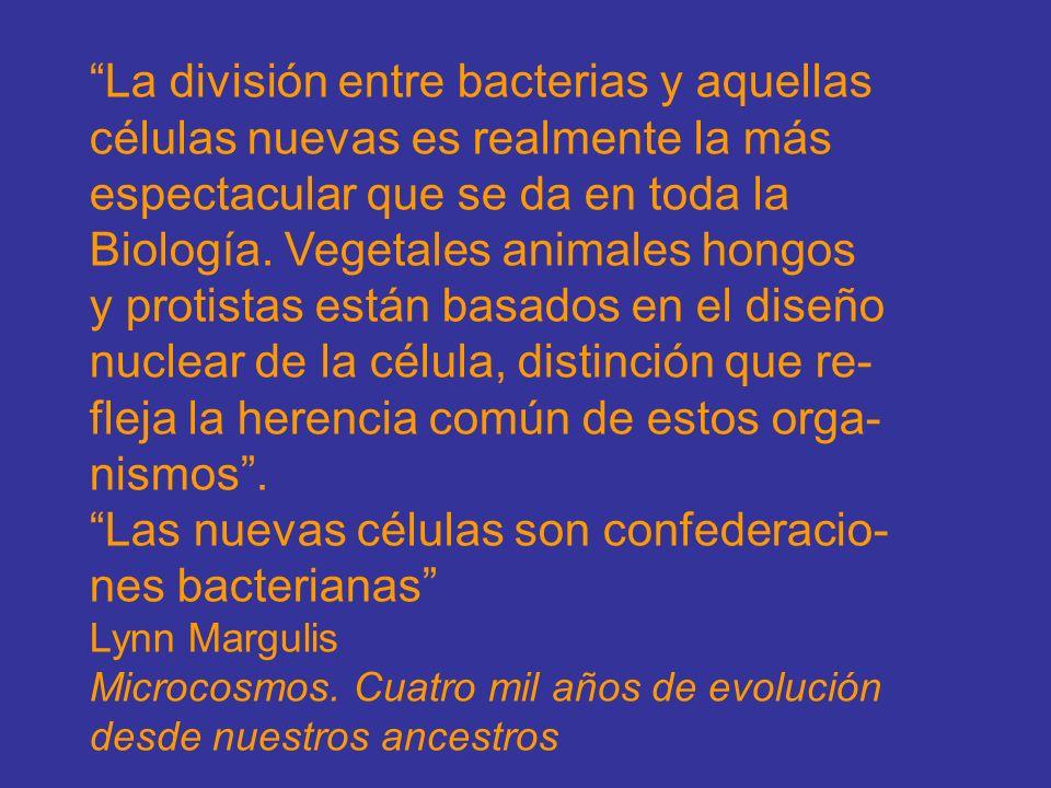 La división entre bacterias y aquellas células nuevas es realmente la más espectacular que se da en toda la Biología. Vegetales animales hongos y prot