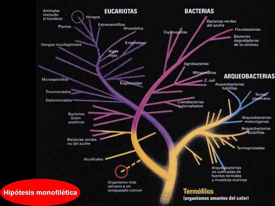 Hipótesis monofilética