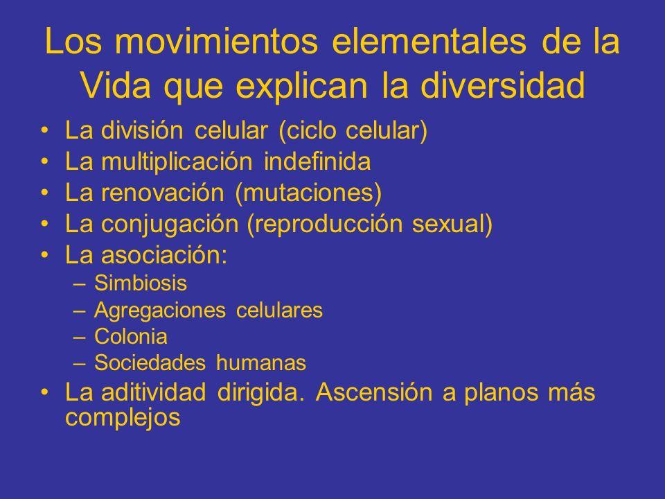 Los movimientos elementales de la Vida que explican la diversidad La división celular (ciclo celular) La multiplicación indefinida La renovación (muta