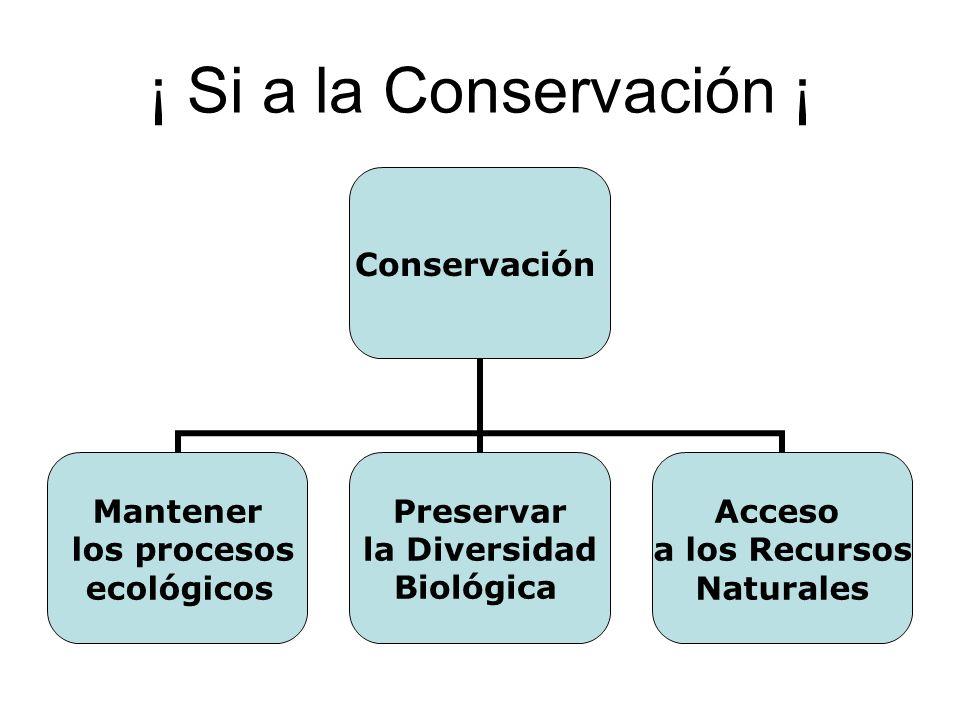 ¡ Si a la Conservación ¡ Conservación Mantener los procesos ecológicos Preservar la Diversidad Biológica Acceso a los Recursos Naturales