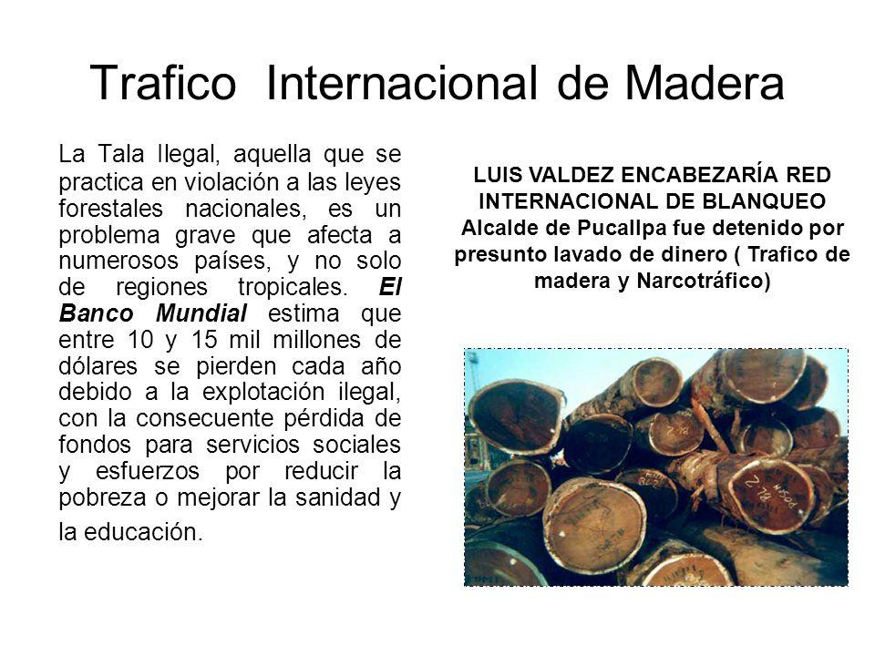 Trafico Internacional de Madera La Tala Ilegal, aquella que se practica en violación a las leyes forestales nacionales, es un problema grave que afect