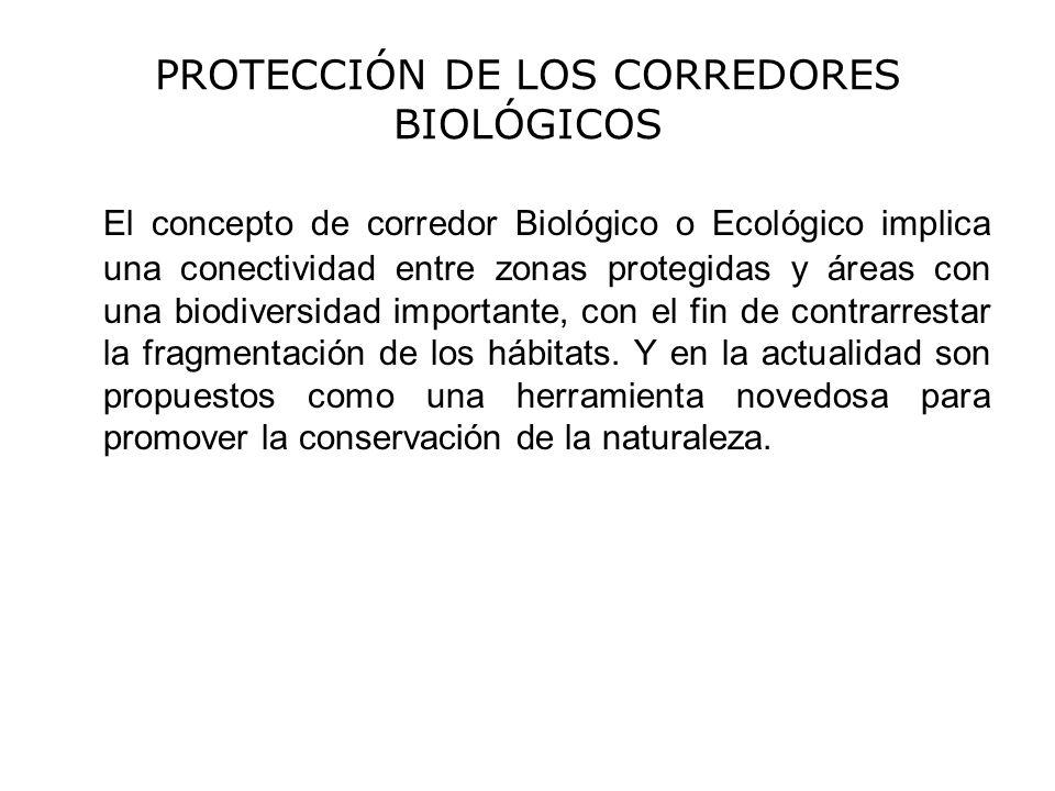 PROTECCIÓN DE LOS CORREDORES BIOLÓGICOS El concepto de corredor Biológico o Ecológico implica una conectividad entre zonas protegidas y áreas con una