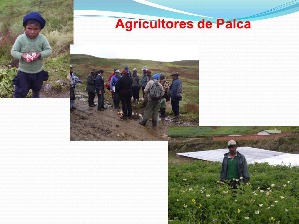 Agricultores de Palca