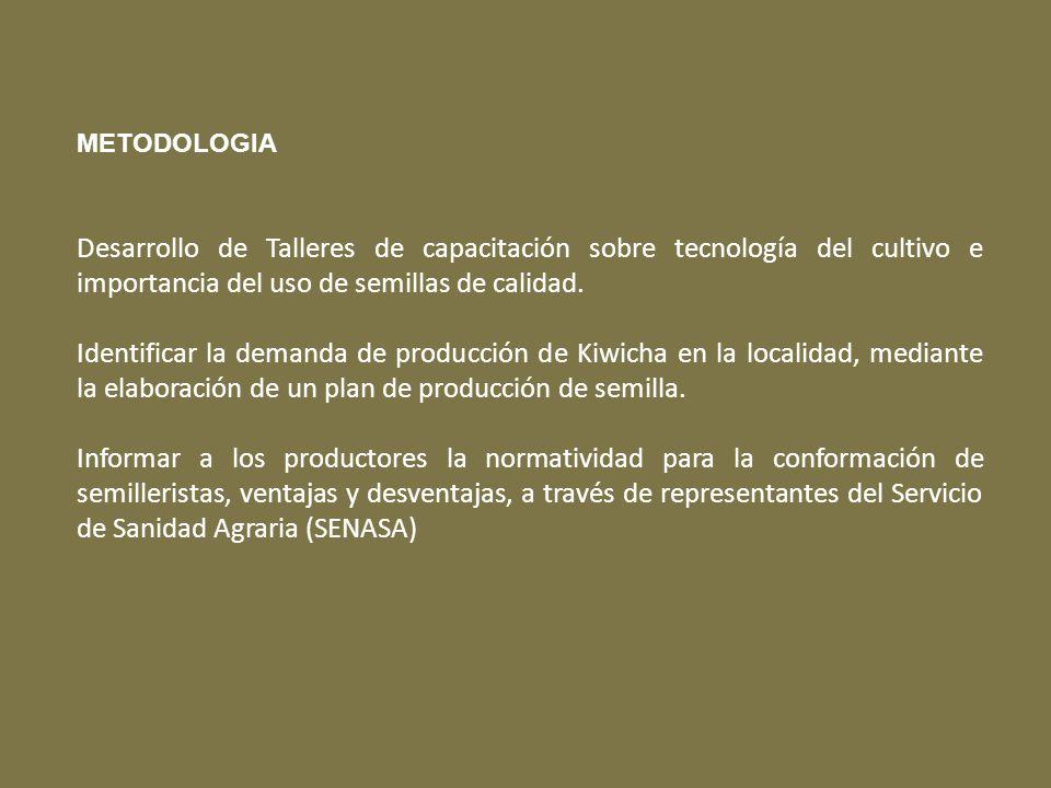 METODOLOGIA Desarrollo de Talleres de capacitación sobre tecnología del cultivo e importancia del uso de semillas de calidad. Identificar la demanda d