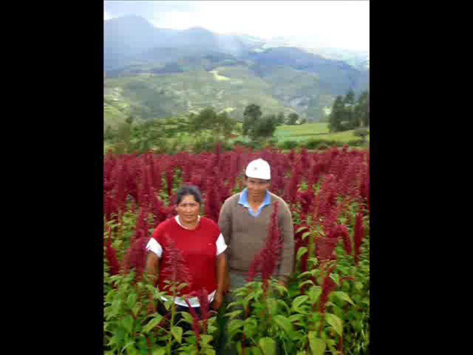 Julio del 2009 MINISTERIO DE AGRICULTURA Instituto Nacional de Innovación Agraria Muchas Gracias ING.
