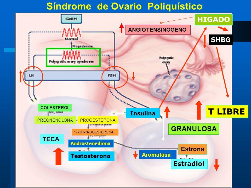 Insulina Testosterona HIGADO SHBG T LIBRE Estradiol Androstenediona Estrona Aromatasa TECA GRANULOSA COLESTEROL PREGNENOLONAPROGESTERONA 17-OH-PROGEST
