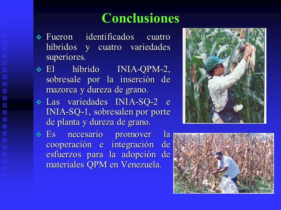 Conclusiones Fueron identificados cuatro híbridos y cuatro variedades superiores. Fueron identificados cuatro híbridos y cuatro variedades superiores.
