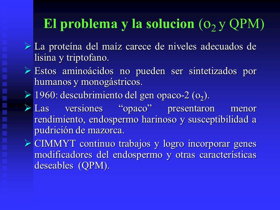 El problema y la solucion ( o 2 y QPM) La proteína del maíz carece de niveles adecuados de lisina y triptofano. La proteína del maíz carece de niveles