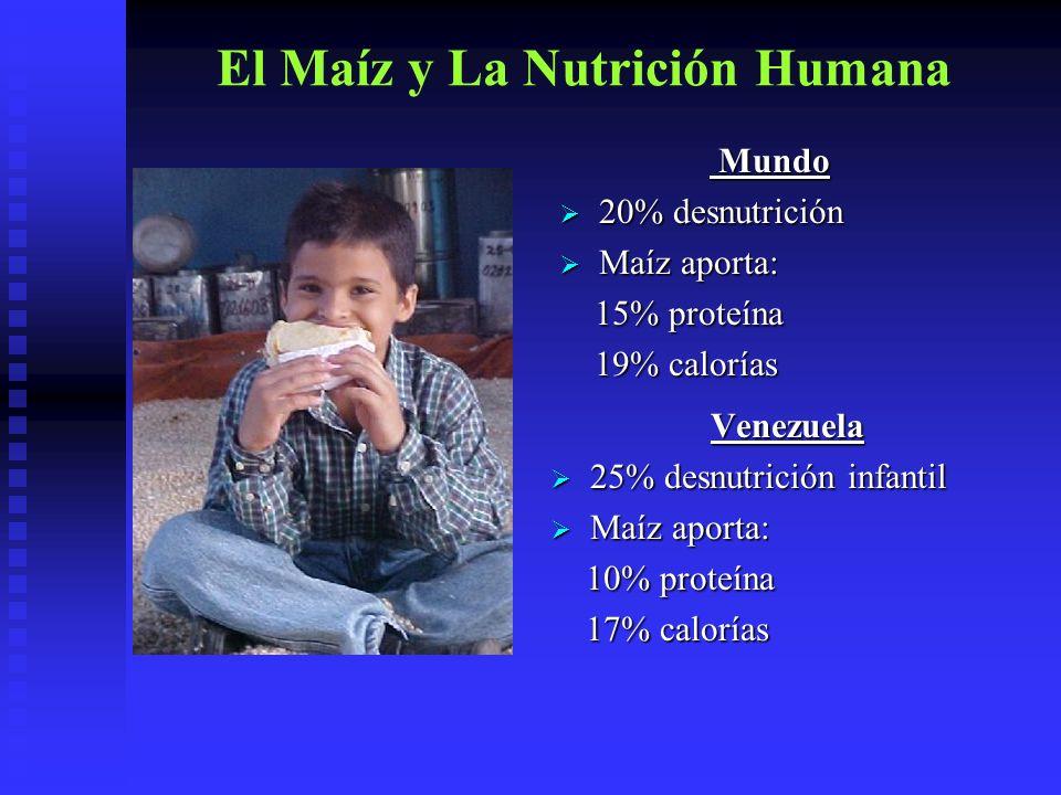 El Maíz y La Nutrición Humana Mundo Mundo 20% desnutrición 20% desnutrición Maíz aporta: Maíz aporta: 15% proteína 15% proteína 19% calorías 19% calor
