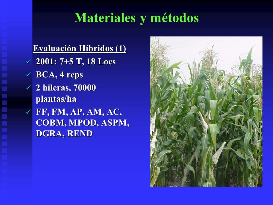 Materiales y métodos Evaluación Variedades 2001: 6+7T, 8 Locs 2001: 6+7T, 8 Locs BCA, 4 reps BCA, 4 reps 2 hileras, 70000 plantas/ha 2 hileras, 70000 plantas/ha FF, FM, AP, AM, AC, COBM, MPOD, ASPM, DGRA, REND FF, FM, AP, AM, AC, COBM, MPOD, ASPM, DGRA, REND
