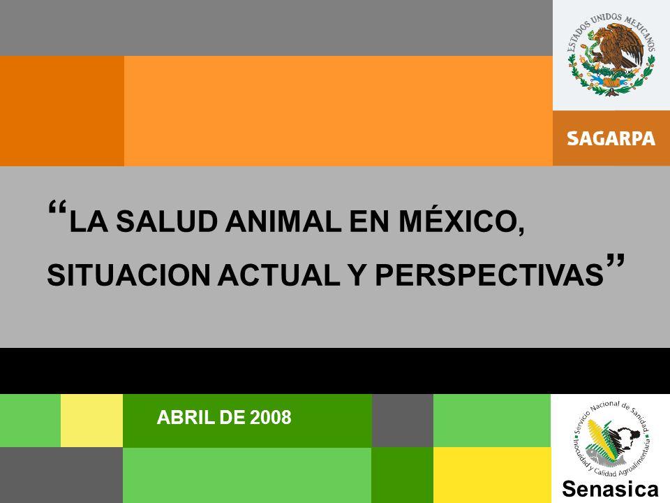 SENASICA Senasica ABRIL DE 2008 LA SALUD ANIMAL EN MÉXICO, SITUACION ACTUAL Y PERSPECTIVAS