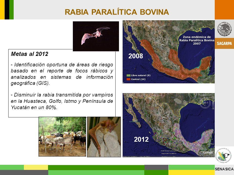 SENASICA RABIA PARALÍTICA BOVINA Metas al 2012 - Identificación oportuna de áreas de riesgo basado en el reporte de focos rábicos y analizados en sist