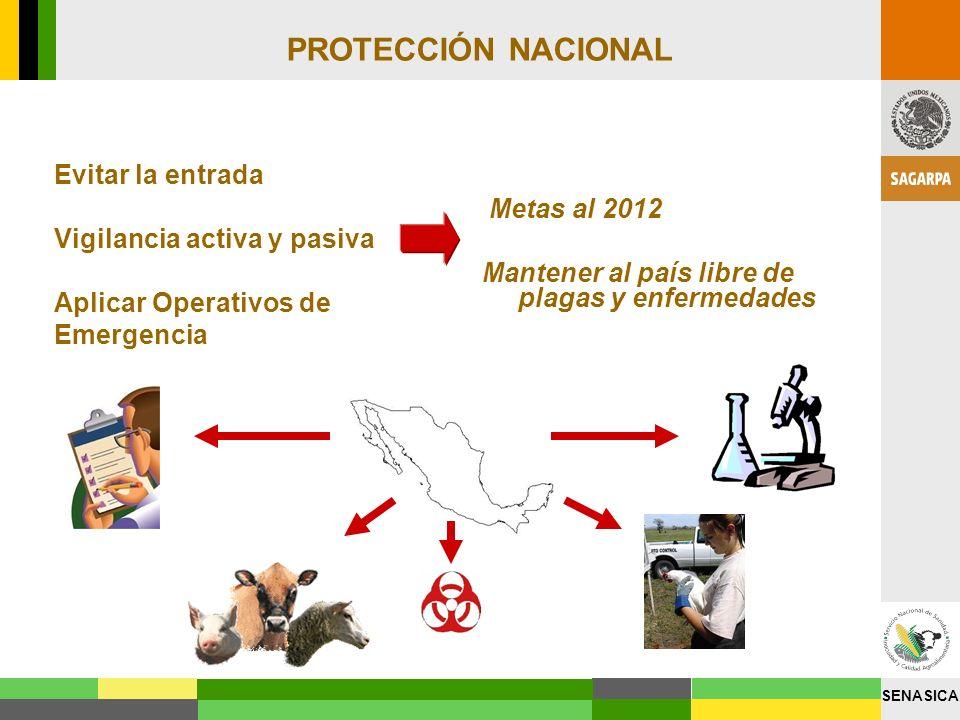 SENASICA PROTECCIÓN NACIONAL Evitar la entrada Vigilancia activa y pasiva Aplicar Operativos de Emergencia Metas al 2012 Mantener al país libre de pla