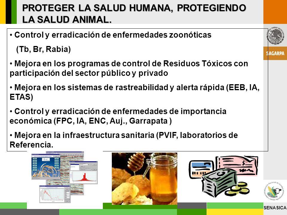 SENASICA PROTEGER LA SALUD HUMANA, PROTEGIENDO LA SALUD ANIMAL. Control y erradicación de enfermedades zoonóticas (Tb, Br, Rabia) Mejora en los progra
