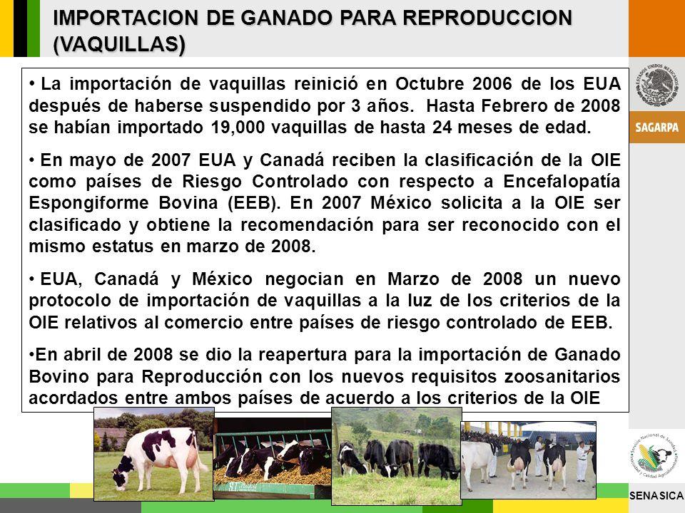 SENASICA IMPORTACION DE GANADO PARA REPRODUCCION (VAQUILLAS ) La importación de vaquillas reinició en Octubre 2006 de los EUA después de haberse suspe