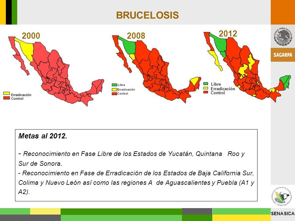 SENASICA BRUCELOSIS Erradicación Control 2000 Erradicación Control Libre 2008 Erradicación Control Libre 2012 Metas al 2012. - Reconocimiento en Fase