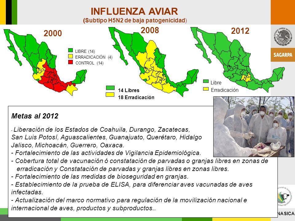 SENASICA INFLUENZA AVIAR 2012 2008 ( Subtipo H5N2 de baja patogenicidad) Metas al 2012 - Liberación de los Estados de Coahuila, Durango, Zacatecas, Sa
