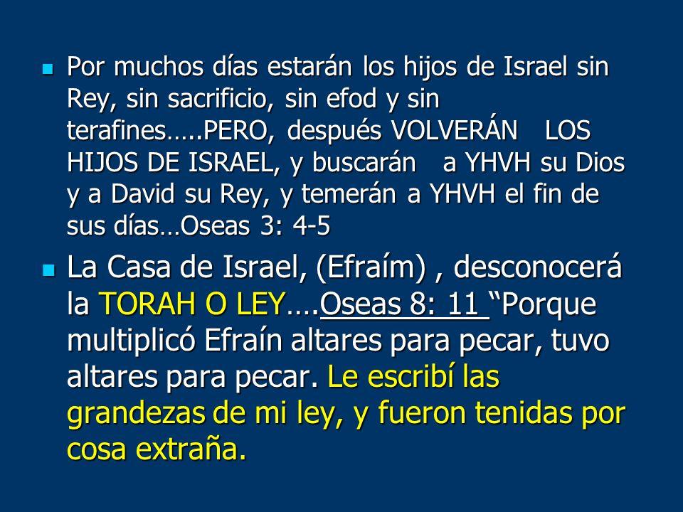 Por muchos días estarán los hijos de Israel sin Rey, sin sacrificio, sin efod y sin terafines…..PERO, después VOLVERÁN LOS HIJOS DE ISRAEL, y buscarán