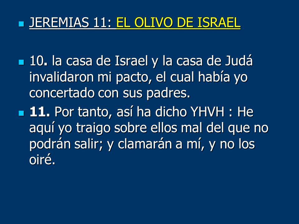 JEREMIAS 11: EL OLIVO DE ISRAEL JEREMIAS 11: EL OLIVO DE ISRAEL 10. la casa de Israel y la casa de Judá invalidaron mi pacto, el cual había yo concert