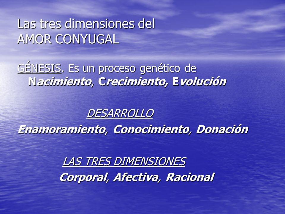Las tres dimensiones del AMOR CONYUGAL GÉNESIS. Es un proceso genético de Nacimiento, Crecimiento, Evolución DESARROLLO DESARROLLO Enamoramiento, Cono