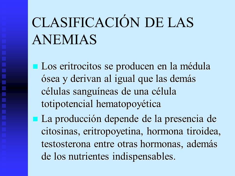 CLASIFICACIÓN DE LAS ANEMIAS Los eritrocitos se producen en la médula ósea y derivan al igual que las demás células sanguíneas de una célula totipoten
