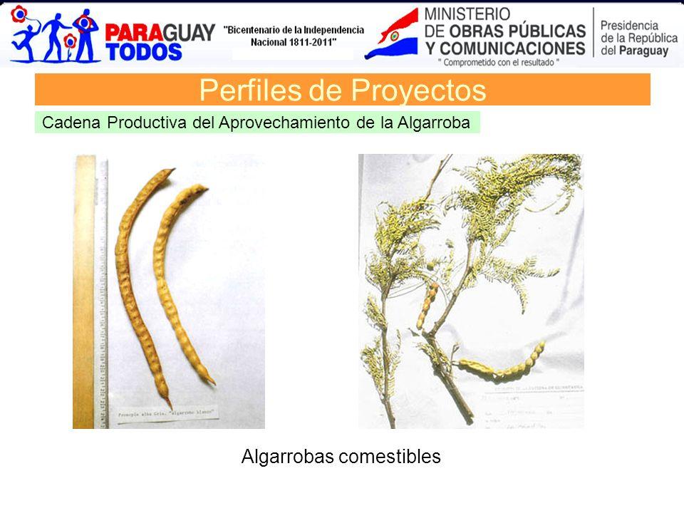 Demanda de derivados del petróleo. Año 2006 Matriz de Demanda 2008 Perfiles de Proyectos Cadena Productiva del Aprovechamiento de la Algarroba Algarro