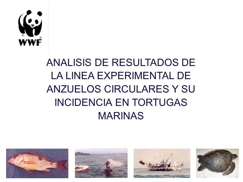 ETAPAS PROYECTO PACKARD (BY CATCH) 2005 (COBERTURA REGIONAL) DIAGNOSTICO Revision bibliográfica Censo pescadores 2001.
