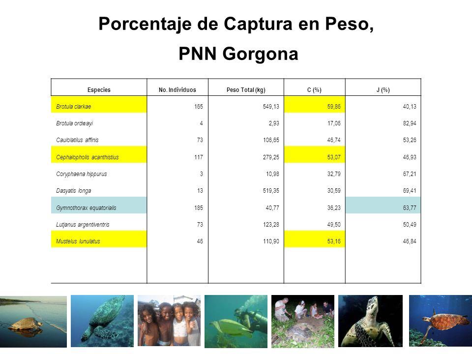 Porcentaje de Captura en Peso, PNN Gorgona EspeciesNo. IndividuosPeso Total (kg)C (%)J (%) Brotula clarkae 165549,1359,8640,13 Brotula ordwayi 42,9317