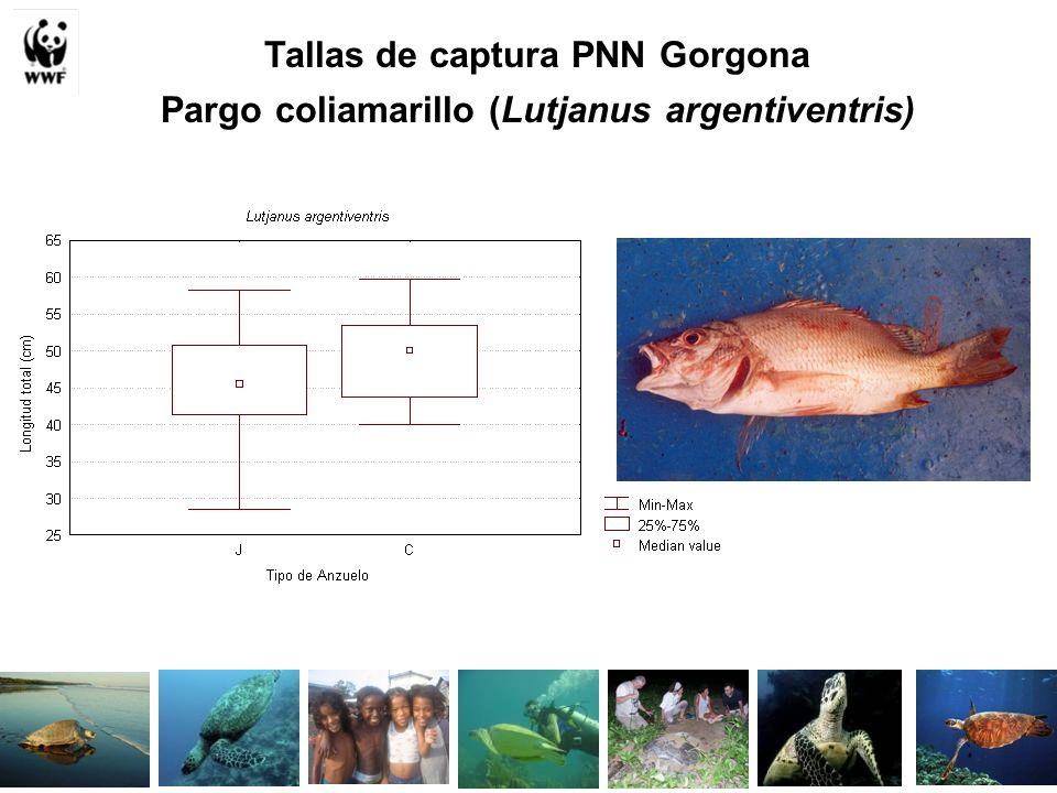 Tallas de captura PNN Gorgona Pargo coliamarillo (Lutjanus argentiventris)