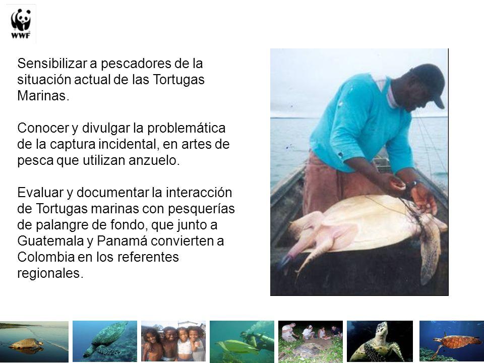 Sensibilizar a pescadores de la situación actual de las Tortugas Marinas. Conocer y divulgar la problemática de la captura incidental, en artes de pes