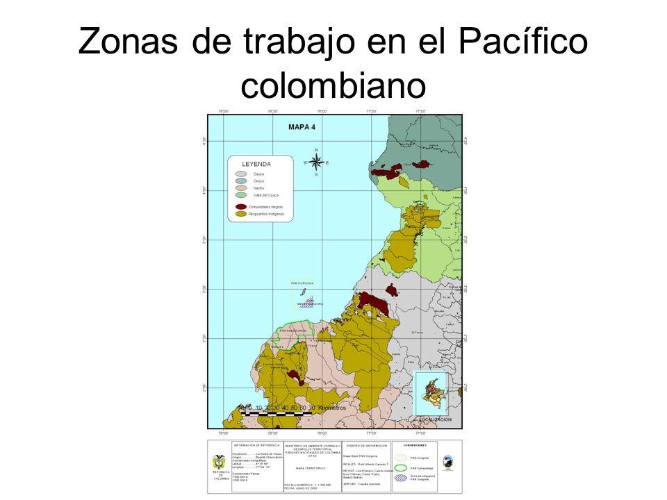 CAPTURA INCIDENTAL En Gorgona el espinel experimental reportó como captura incidental en el mes de mayo una tortuga negra (Chelonia agassizii ) en un anzuelo C.