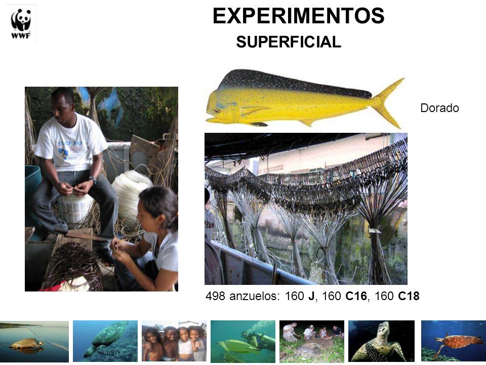 EXPERIMENTOS SUPERFICIAL 498 anzuelos: 160 J, 160 C16, 160 C18 Dorado