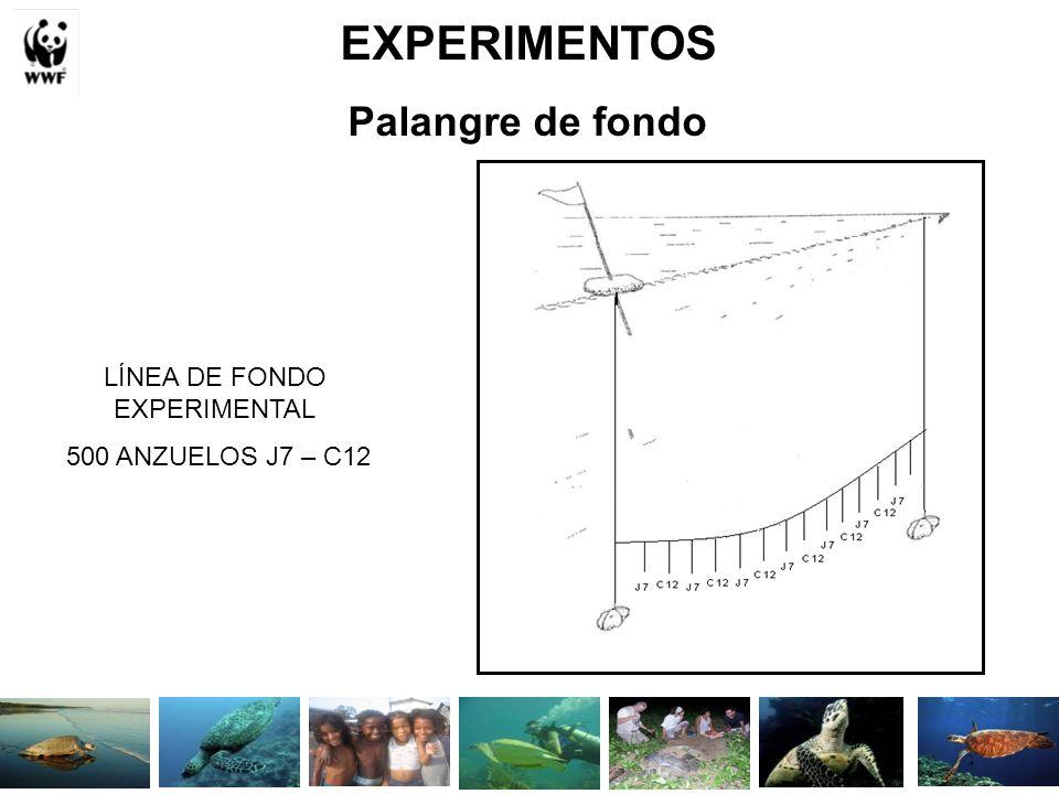 EXPERIMENTOS Palangre de fondo LÍNEA DE FONDO EXPERIMENTAL 500 ANZUELOS J7 – C12