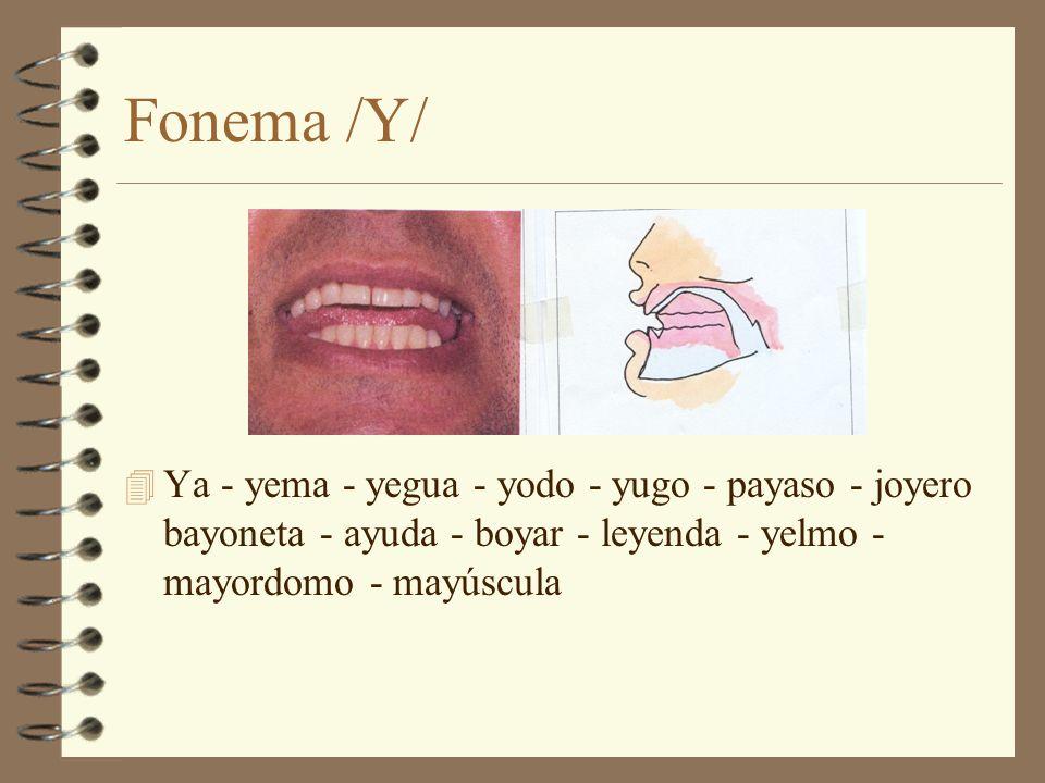 Fonema /Y/ 4 Ya - yema - yegua - yodo - yugo - payaso - joyero bayoneta - ayuda - boyar - leyenda - yelmo - mayordomo - mayúscula
